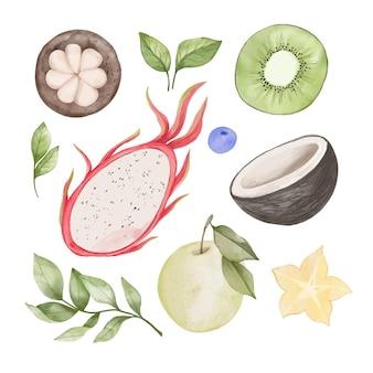 Collezione di frutta acquerello dipinto a mano