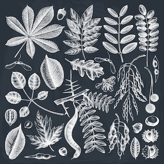 Collezione di foglie autunnali disegnate a mano sulla lavagna. elementi botanici eleganti e di tendenza. foglie di autunno disegnate a mano, bacche, schizzi di semi.