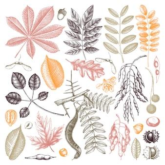 Collezione di foglie autunnali disegnate a mano a colori. elementi botanici eleganti e di tendenza. foglie di autunno disegnate a mano, bacche, schizzi di semi. perfetto per inviti, biglietti, volantini, etichette, imballaggi.
