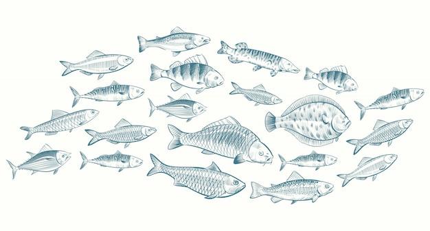 Illustrazione di pesce abbozzato a mano. banner di vita sottomarina per menu del ristorante