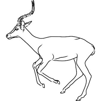 Schizzo a mano, vettore di impala disegnato a mano