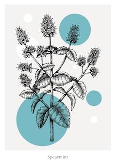 Menta disegnata a mano con illustrazione di fiori e foglie