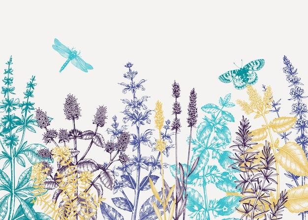 Sfondo di erbe estive abbozzato a mano nei colori Vettore Premium