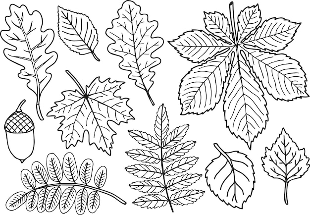 Set di foglie autunnali in bianco e nero da colorare disegnati a mano
