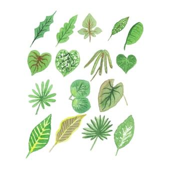 Acquerello fatto a mano foglie tropicali collezioni Vettore Premium