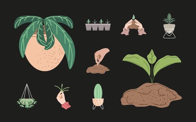 Mani con piantagione di piante