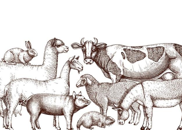 Sfondo vettoriale di animali da fattoria abbozzato