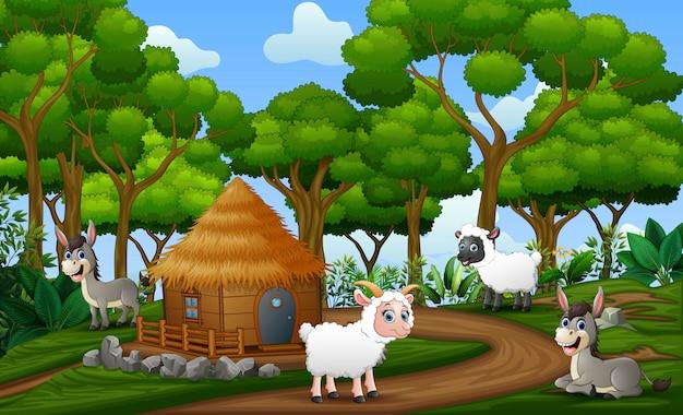 Animali felici che godono in terreni agricoli