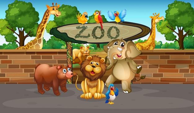 Animali felici nello zoo
