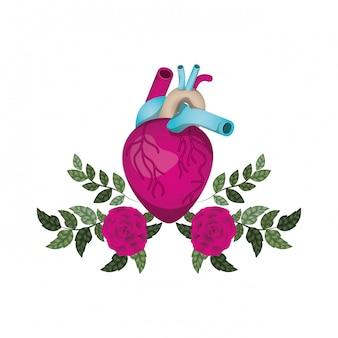 Cuore con vene e fiori icona isolata