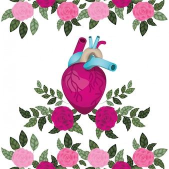 Cuore con vene e rose icona isolata