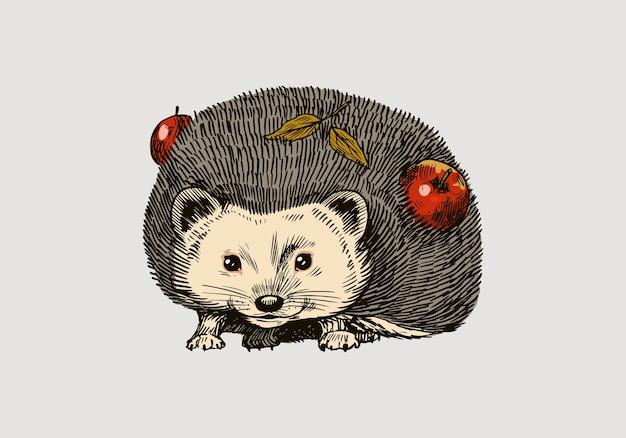 Riccio con le mele
