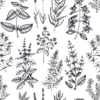 Sfondo a base di erbe maggiorana salata rosmarino timo origano lavanda motivo senza cuciture