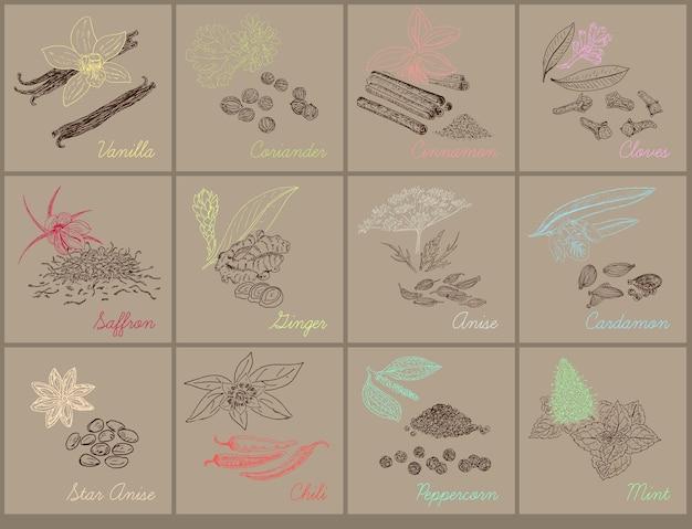 Illustrazione botanica naturale a base di erbe con erbe e spezie organiche fresche