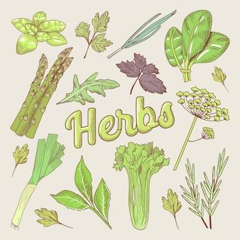 Doodle disegnato a mano di erbe. alimenti naturali biologici