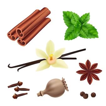 Erbe e spezie. il vegano alla cannella lascia i semi di vaniglia freschi per la cottura della raccolta realistica delle erbe di vettore
