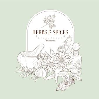 Erbe e spezie, illustrazione banner