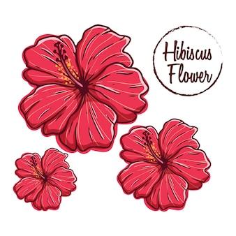Collezione di fiori di ibisco con stile di disegno a mano colorato