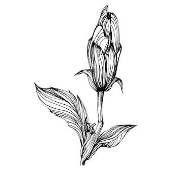 Fiore di ibisco. fiore botanico floreale.