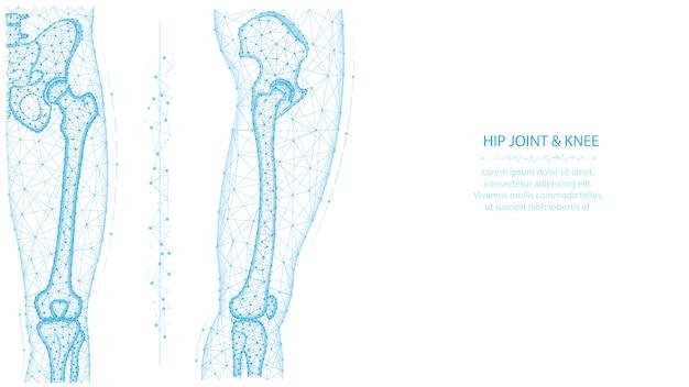 Illustrazione poligonale di anca e ginocchio anteriore e laterale vista. concetto di anatomia della gamba e del bacino. design medico basso poli astratto