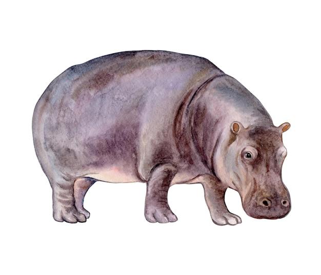 Ippopotamo isolato su sfondo bianco modello di illustrazione dell'acquerello dell'ippopotamo clip art