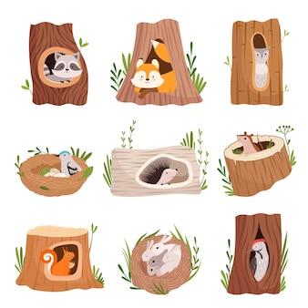 Fori nell'albero. casa cava per animali selvatici tronco foglie cime degli alberi uccelli e caratteri vettoriali scoiattolo. illustrazione albero cavo nella foresta, tronco scavato