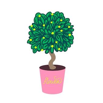 Pianta domestica in una pianta domestica decorativa del vaso di rose.