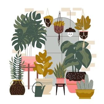 Composizione di piante domestiche con scenario da interno con finestra e piante esotiche