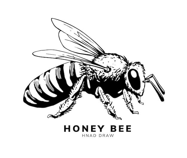 Disegno dell'illustrazione della mano dell'ape del miele