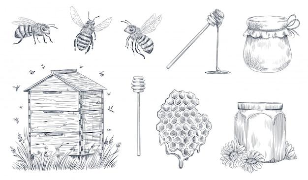 Incisione di api da miele. apicoltura disegnata a mano, fattoria di miele vintage e set di illustrazione vettoriale polline d'api miele