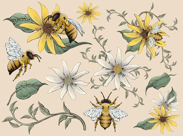 Elementi di api e fiori da miele, stile di ombreggiatura di incisione disegnata a mano retrò, tono colorato