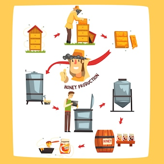 Fasi del processo di produzione del miele, apicoltori che raccolgono il miele e che conservano in un barattolo di cartone animato illustrazioni su sfondo bianco