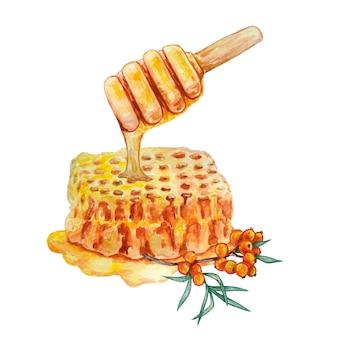 Favo con miele e un ramo di olivello spinoso
