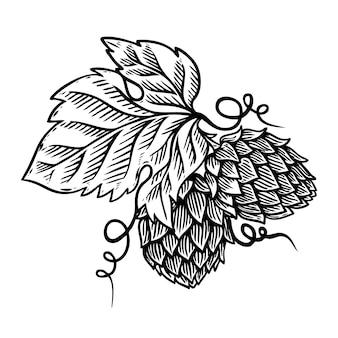 Illustrazione del ramo di luppolo su fondo bianco. elemento per logo, etichetta, emblema, segno. immagine
