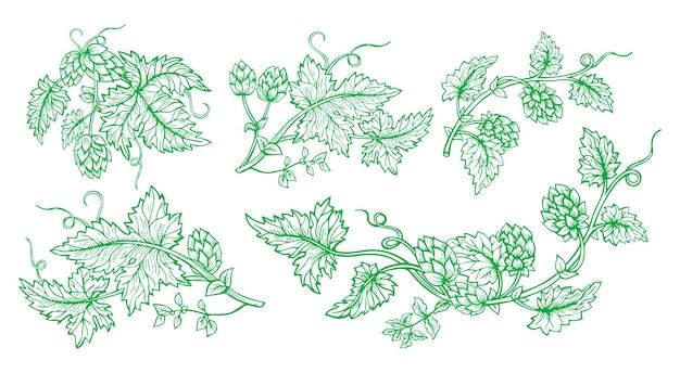 Insieme verde di stile di schizzo disegnato ramo di pianta di luppolo