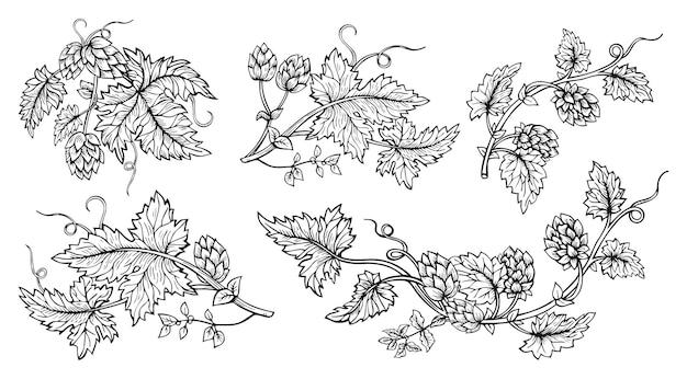 Insieme di stile di schizzo disegnato a mano del ramo della pianta di luppolo