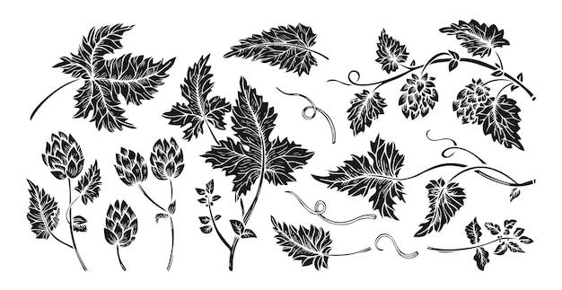 Set di incisione di coni di foglie di ramo di pianta di luppolo