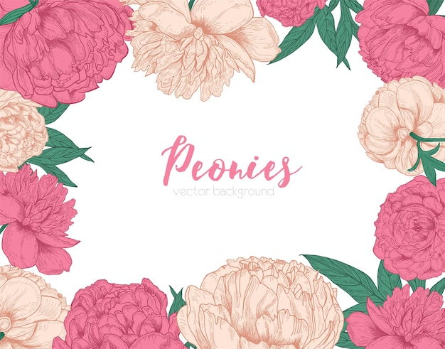 Sfondo orizzontale decorato con cornice o bordo fatto di fiori di peonia in fiore teneri disegnati a mano su bianco