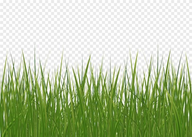 Prato inglese verde orizzontale di erba isolato