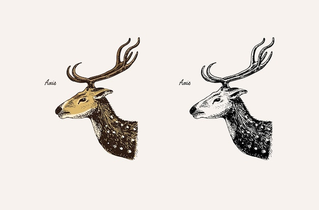 Animali con corna e corno impala gazzella e daino kudu maggiore