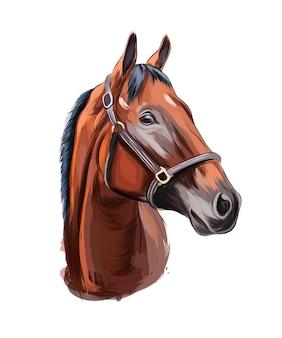 Ritratto di testa di cavallo da vernici multicolori spruzzata di disegno colorato ad acquerello realistico