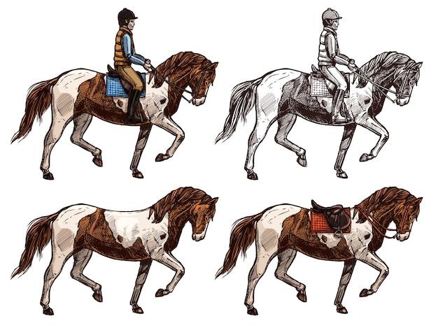 Cavallo e cavaliere, monocromatico e set di colori, schizzo.