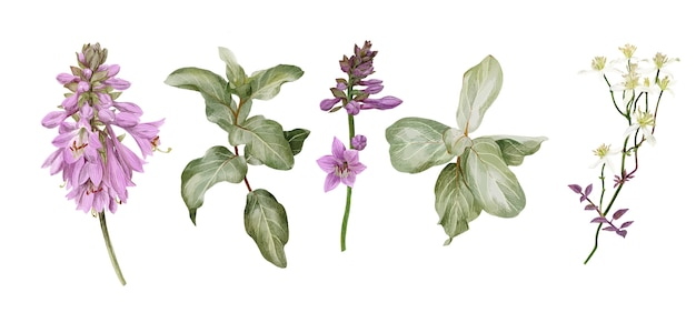 Fiori hosta, rami di mirtillo rosso e clematide bianca
