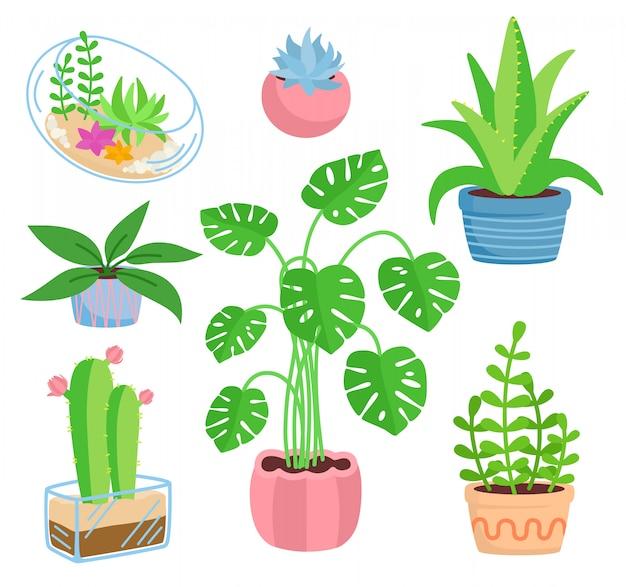 Set di ceramiche in vaso per piante da appartamento, stile cartone animato piatto. piante grasse e piante da appartamento, collezione di cactus, monstera, aloe. germogli verdi in crescita