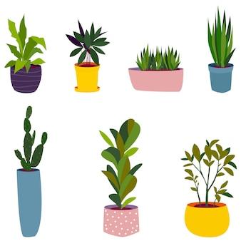 Piante da appartamento, fiori in vasi colorati, diverse dimensioni.