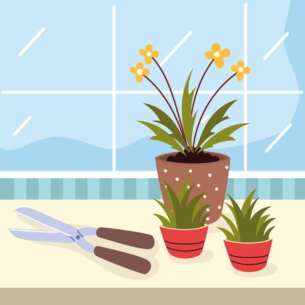 Cura e strumento delle piante d'appartamento