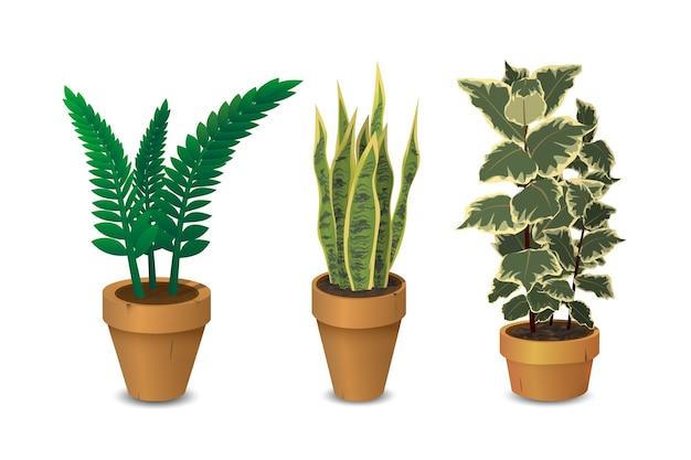 Piante d'appartamento, insieme di piante in vaso