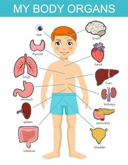 Anatomia del corpo umano, sistema di organi medici infantili. organi interni del corpo del ragazzo. anatomia umana medica per bambini, set di organi per bambini dei cartoni animati. diagramma dei sistemi dei visceri del bambino su fondo bianco.