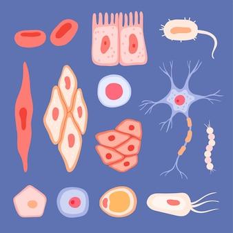 Cellule umane. struttura biologica delle scene di sangue che raccolgono immagini piatte dei linfociti delle cellule.
