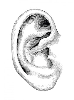 Annata umana di tiraggio della mano dell'orecchio isolata su fondo bianco
